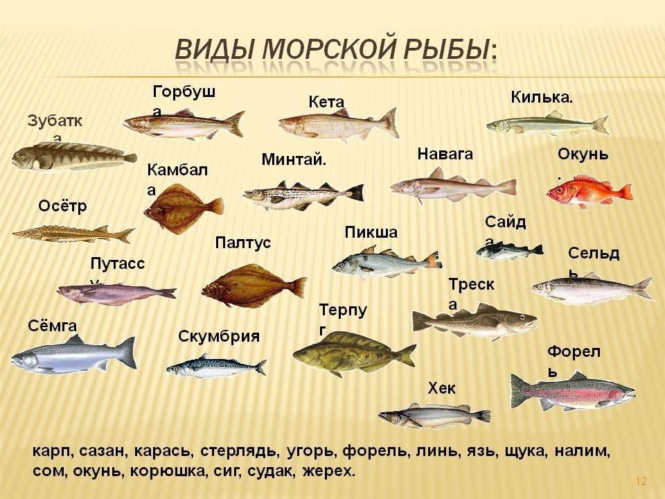 Блюда из рыбы: судак – самые вкусные рецепты