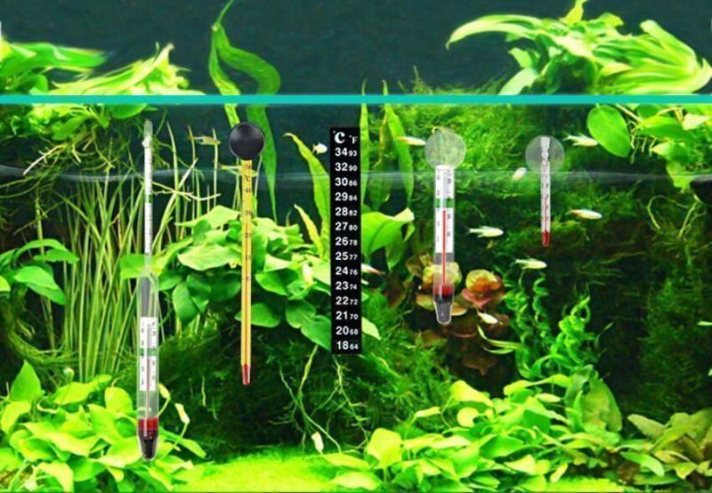 Таблица температур воды для разных видов рыб