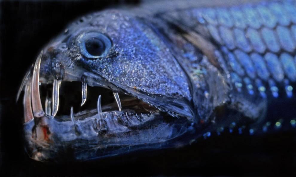 Самые опасные обитатели океана - топ 10, рейтинг, фото
