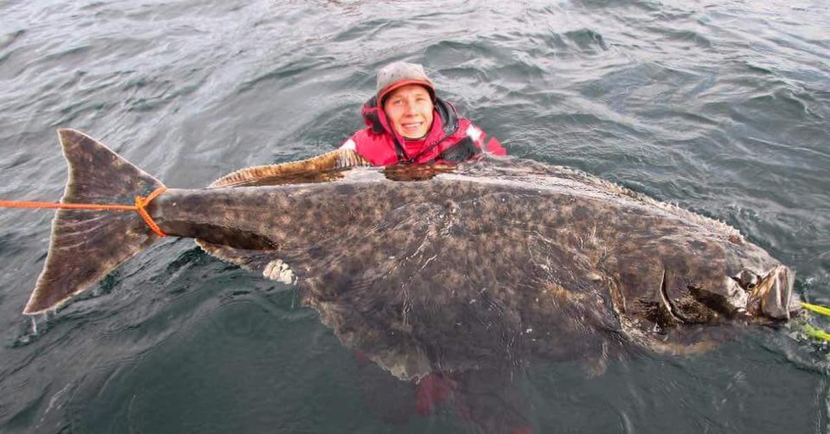 Рыбалка на море (с берега или катера): снасти для морской ловли, как правильно ловить