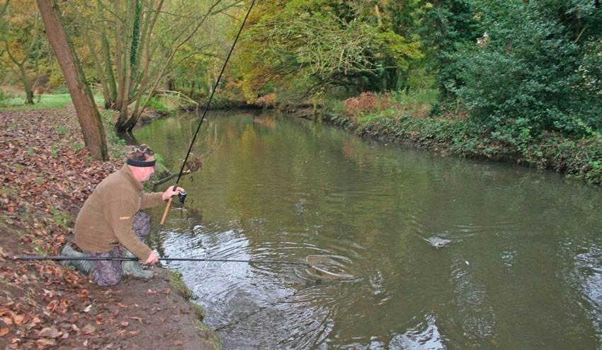 Как ловить плотву на фидер