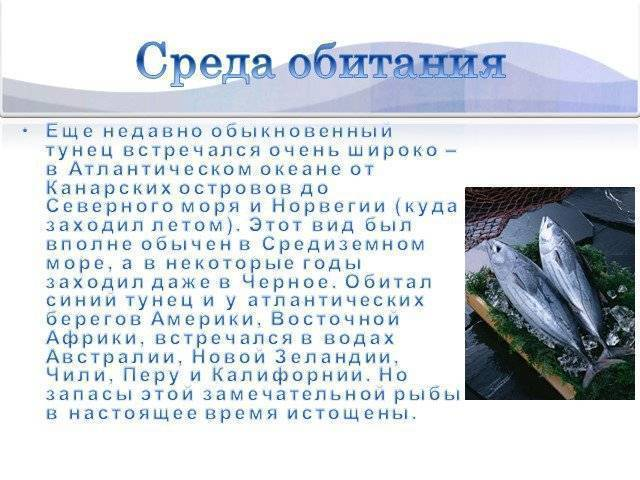 Тунец (42 рецепта с фото) - рецепты с фотографиями на поварёнок.ру