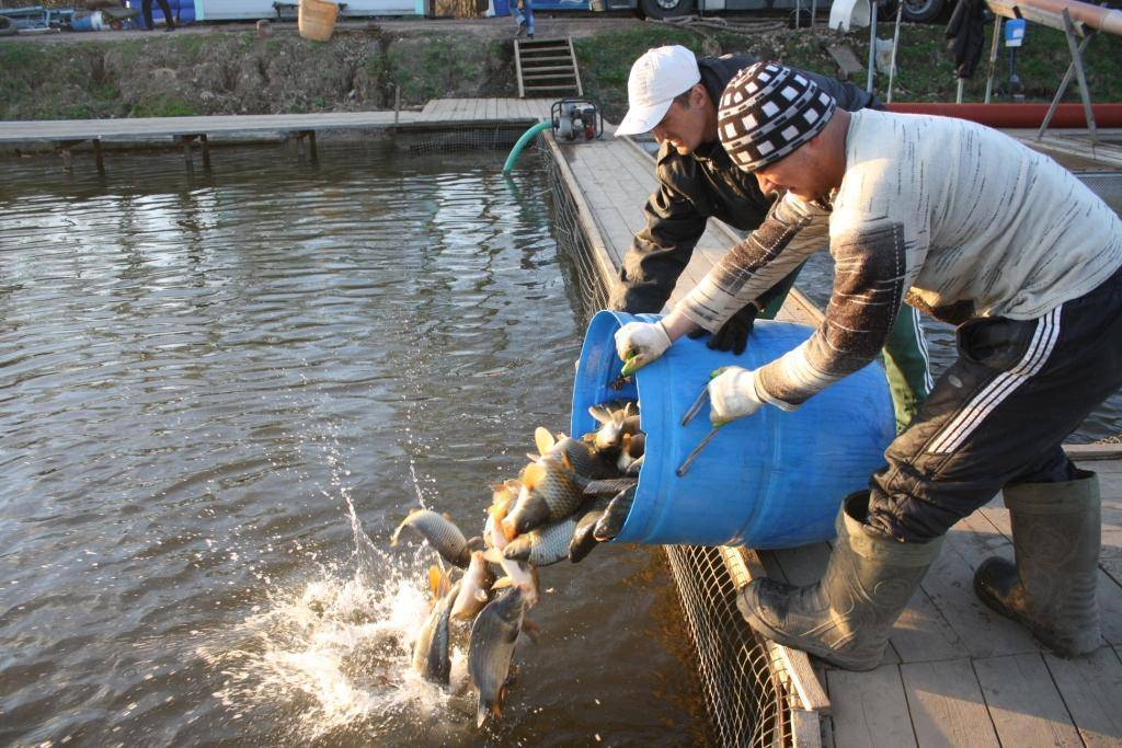Улов по правилам. что надо знать, собираясь на рыбалку | cвободное время | аиф аргументы и факты в беларуси