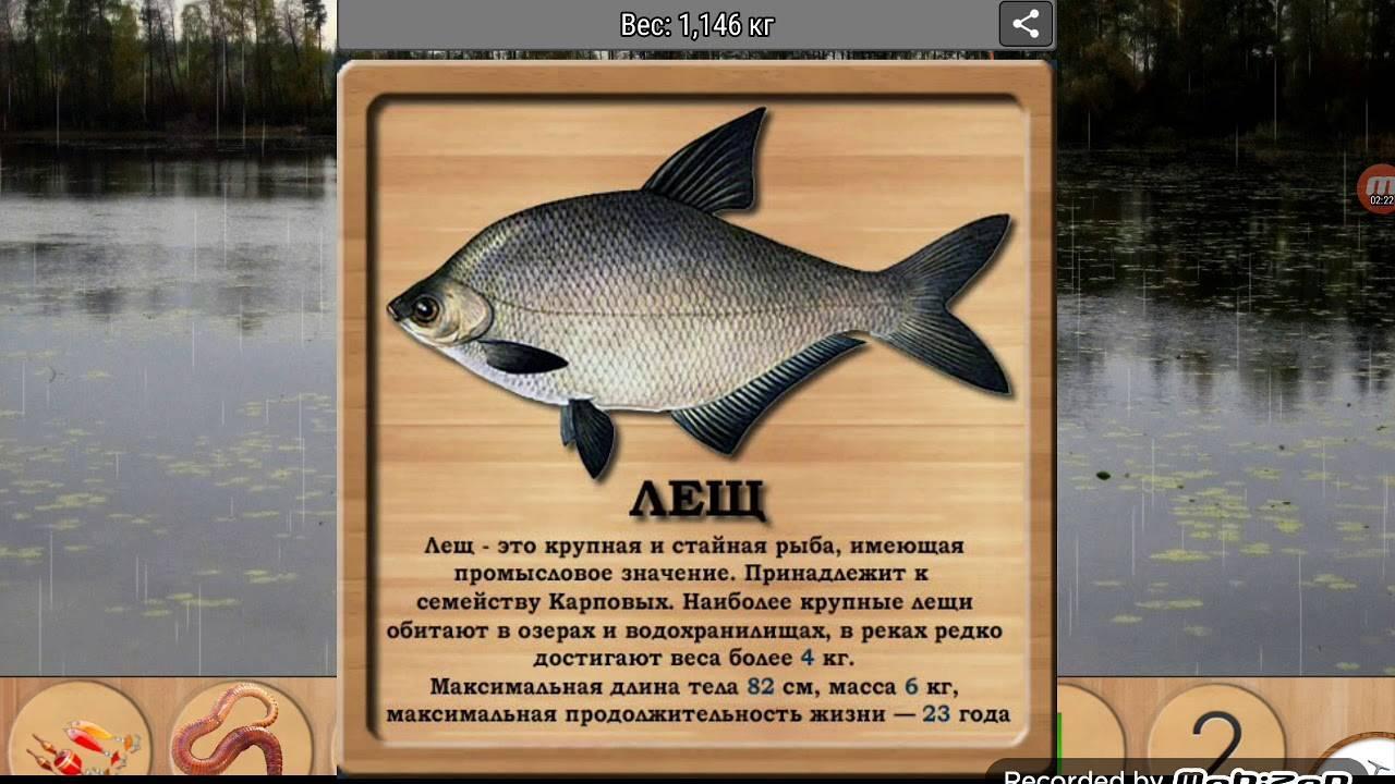Описание рыбы пескарь
