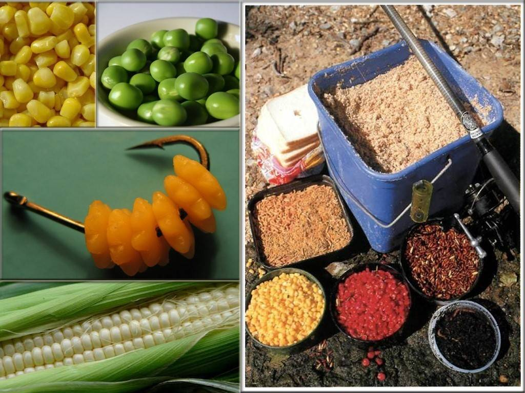 Прикормка на карася своими руками: теория и рецепты