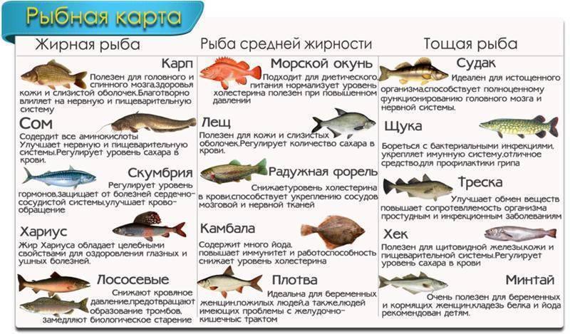 Ценный морепродукт — навага, расскажем о ее полезных свойствах и вкусовых качествах. пищевая ценность и полезные свойства наваги навага вареная калорийность на 100 грамм