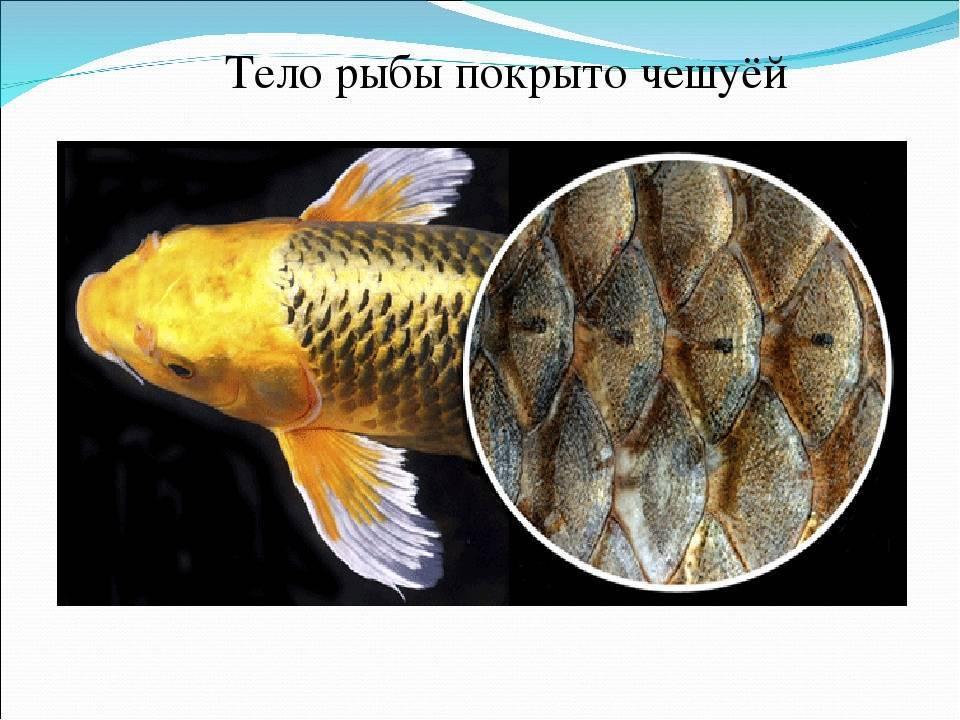 Болезни рыб: причины, симптомы и методы лечения