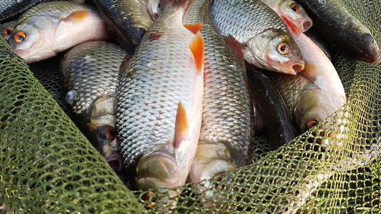 Рыбалка весной - как ловить рыбу в марте, апреле и мае