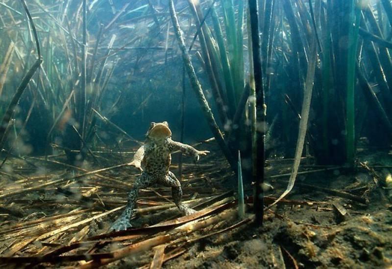 Как найти бровку на дне реки при ловле фидером
