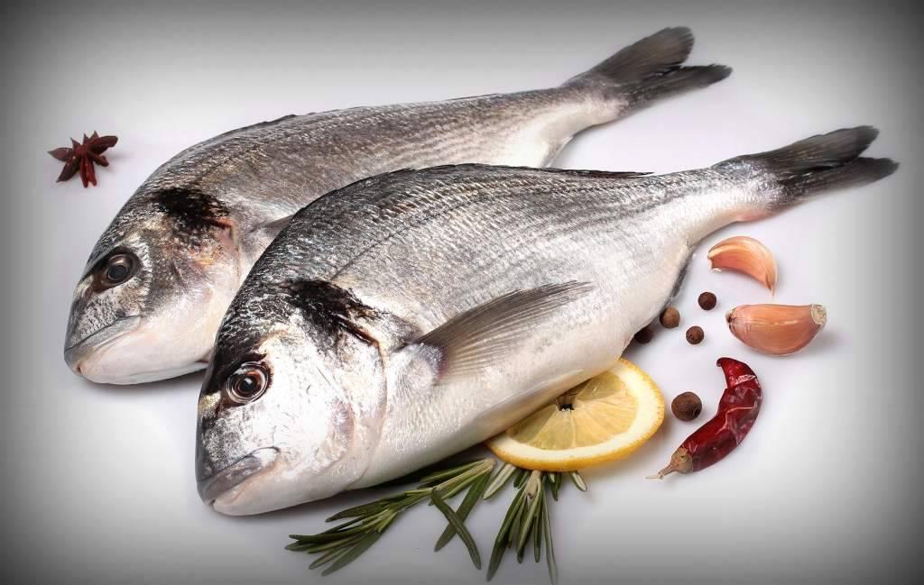 Лобань – рыба для здорового питания :: syl.ru
