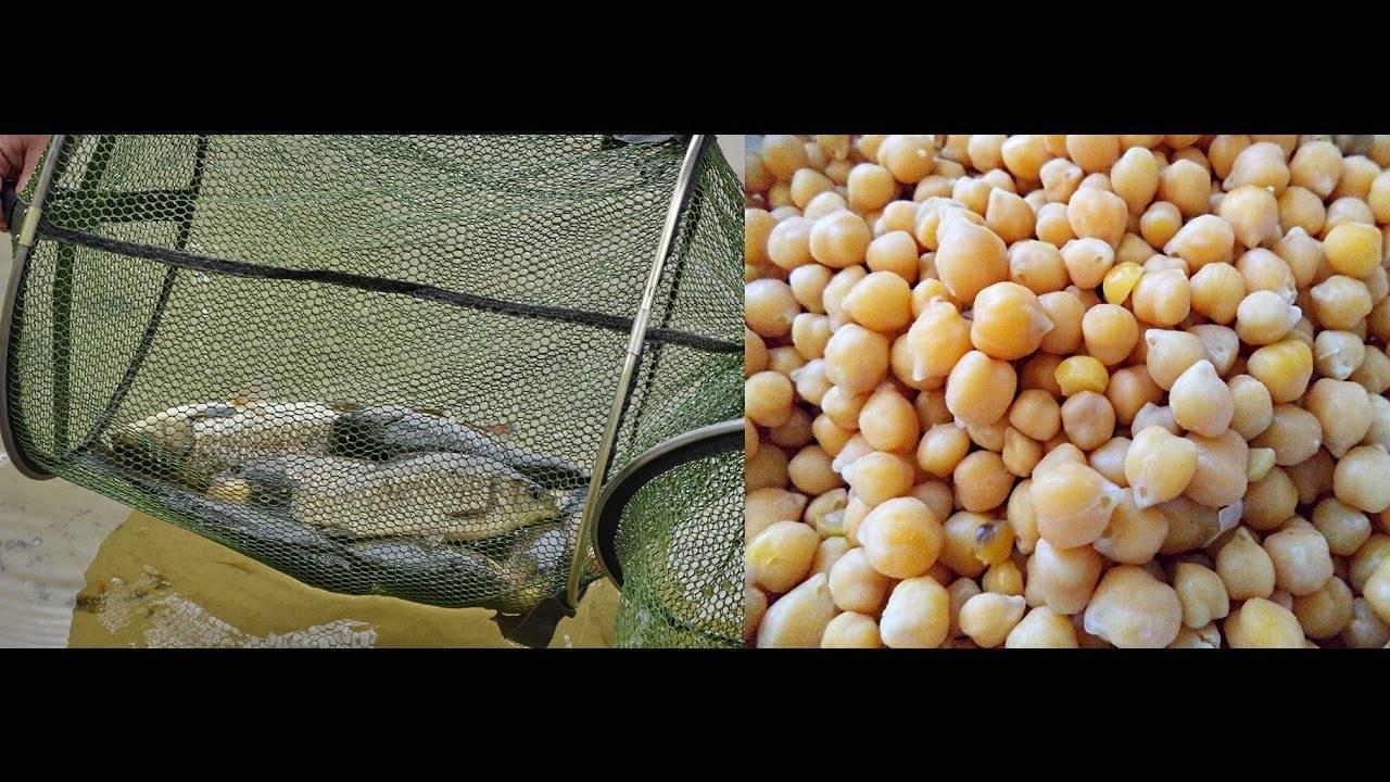 Горох для рыбалки: как правильно выбрать, приготовить и насадить