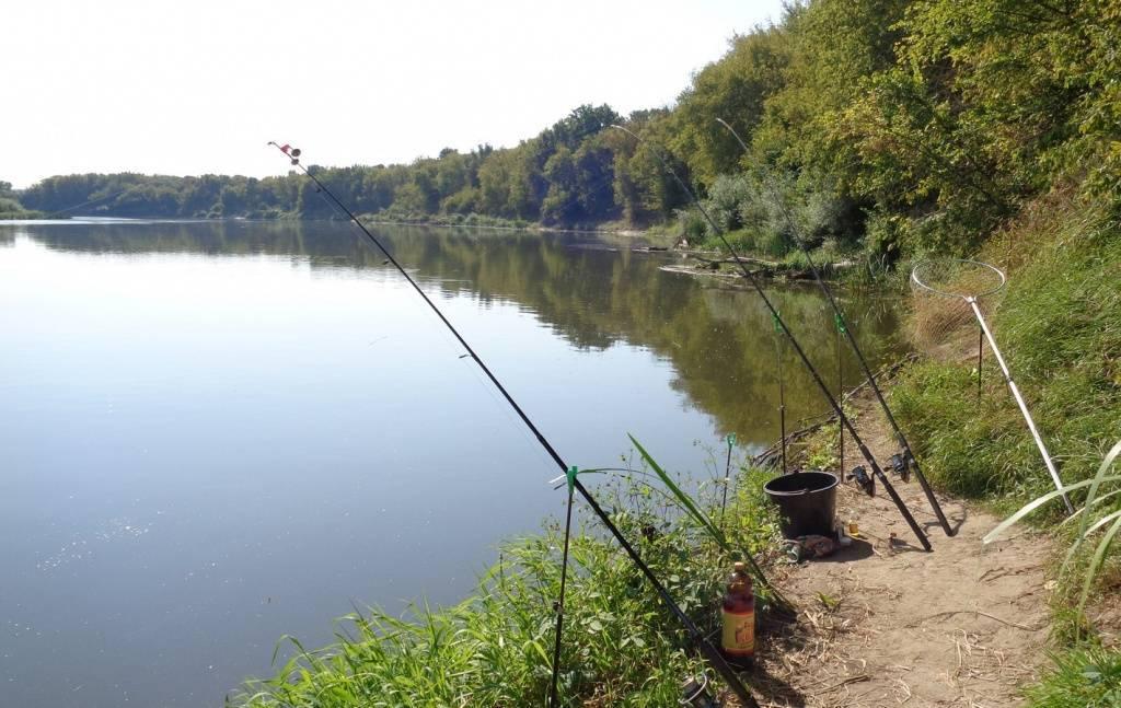 Где ловить рыбу в ростовской области — обзор водоемов