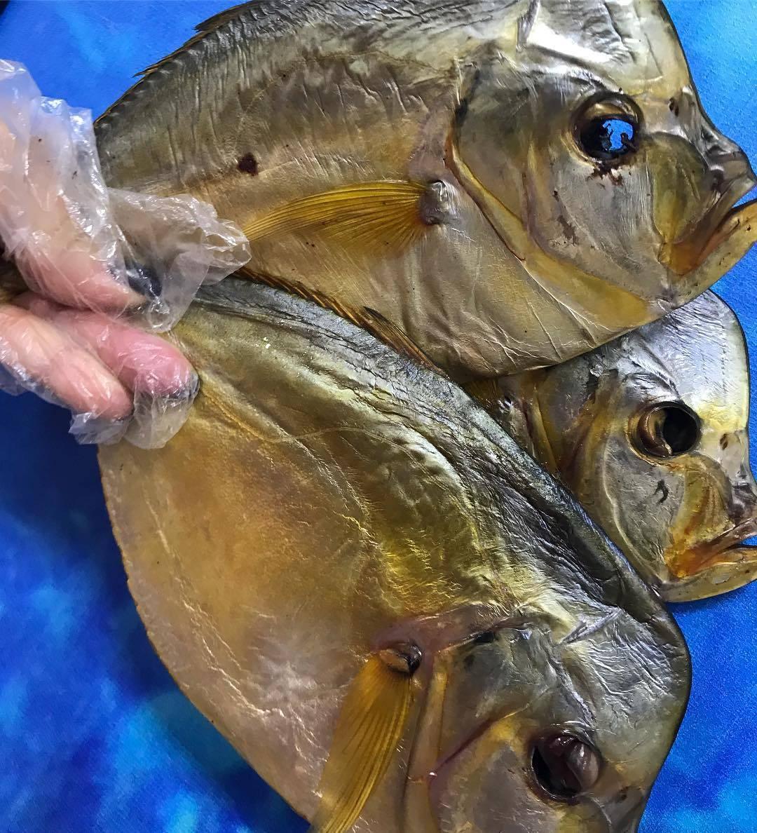 Рыба вомер - 110 фото и видео полезных рыб и места их обитания