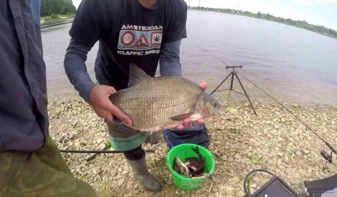 Рыбалочка на могучей реке днепр с берега и лодки фото видео