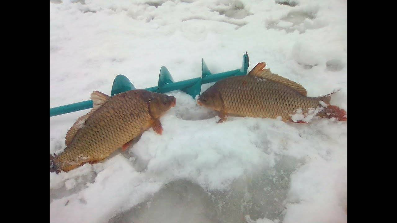 Ловля карпа зимой - читайте на сatcher.fish