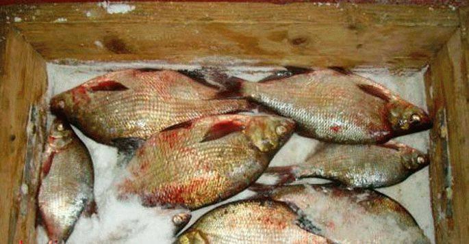Засолка рыбы. как правильно ? посолить рыбу в домашних условиях? соленая рыба - вкусные и простые рецепты