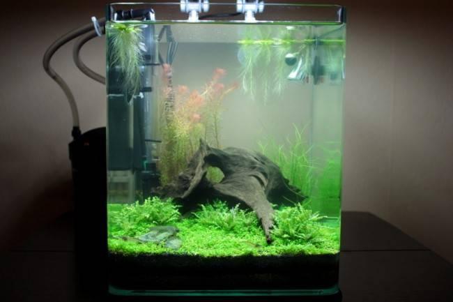 Уход за аквариумным фильтром: очистка и правильное мытье