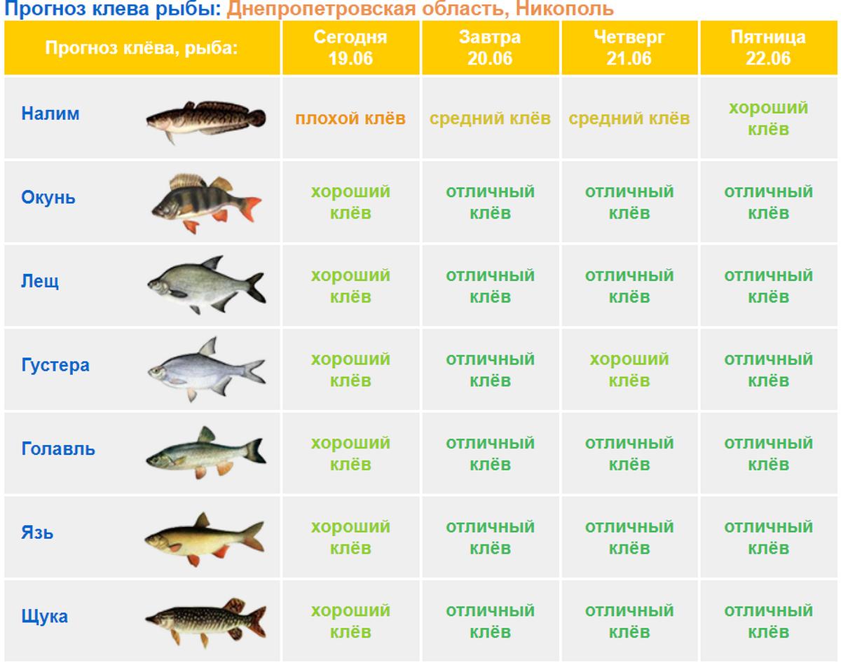 Рыбалка и отдых на межуре в московской области