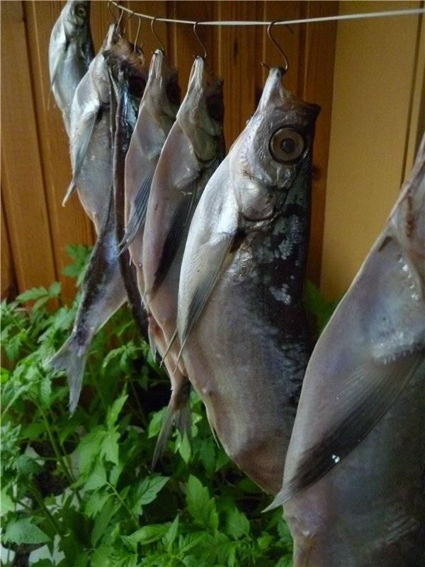 Узнаем как хранить вяленую рыбу в домашних условиях. правила приготовления рыбы