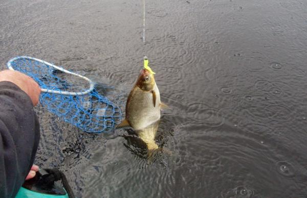 Поплавочная ловля осенью, где ловить, снасти, прикормка + видео