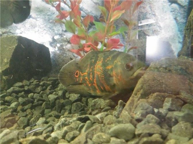 Как спят рыбы в аквариуме и водоёмах, ночью и днём