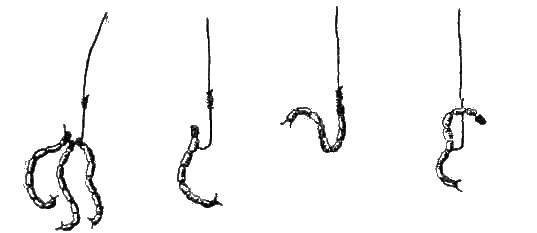 6 лучших способов насаживания мотыля на крючок и мормышку 6 лучших способов насаживания мотыля на крючок и мормышку