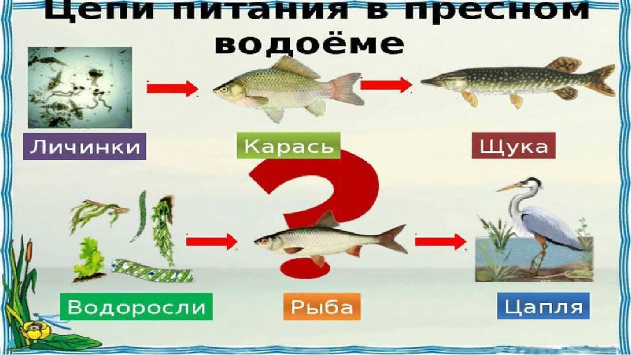 Полезные свойства рыбы для питания