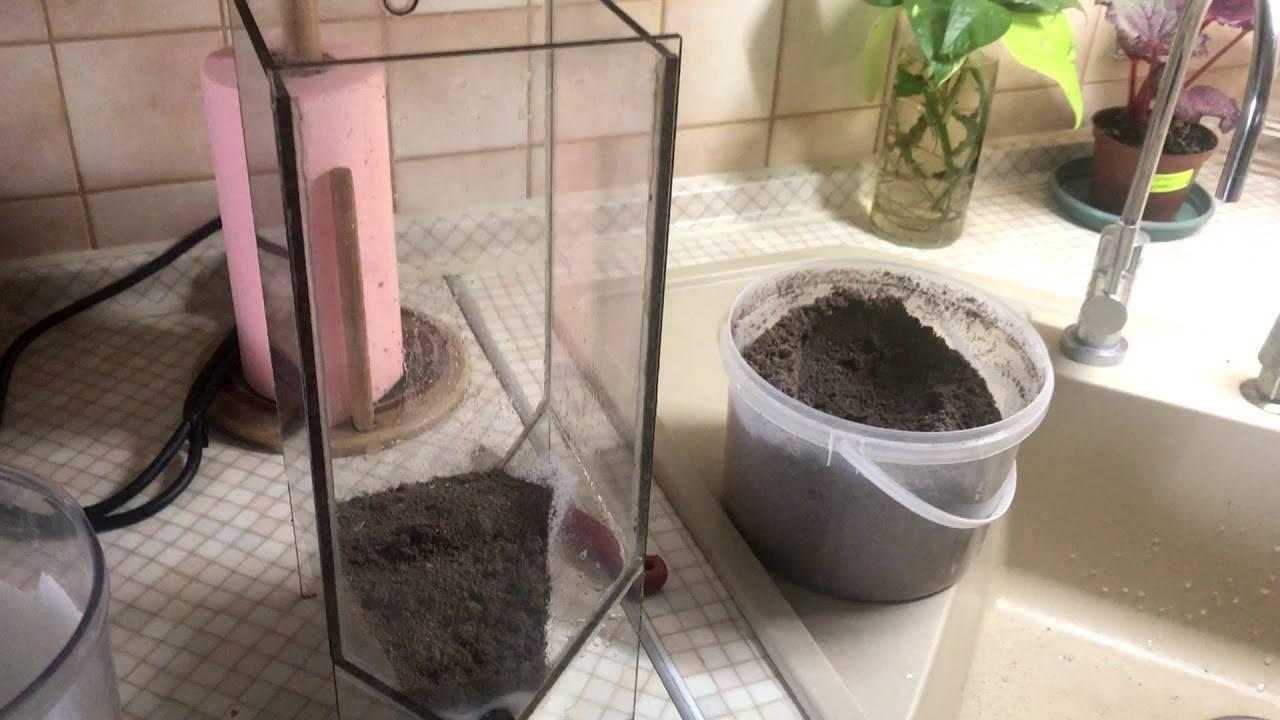 Как выращивать рачков артемии в домашних условиях - сад и огород