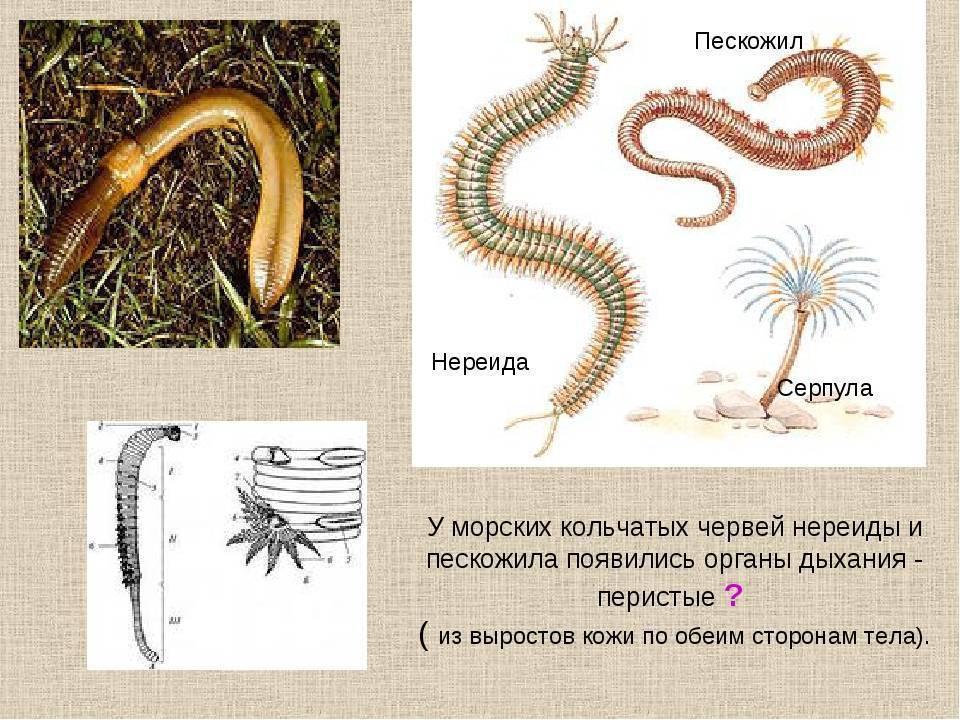 Планарии в аквариуме: как избавиться от паразитов