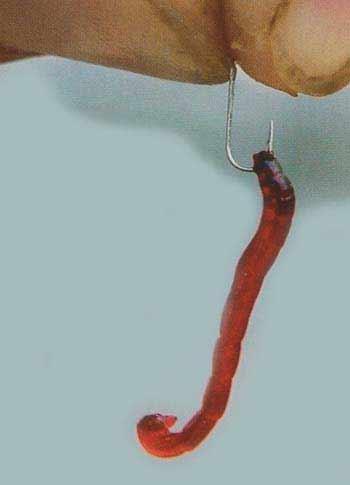 Как правильно насаживать мотыля на крючок разными способами