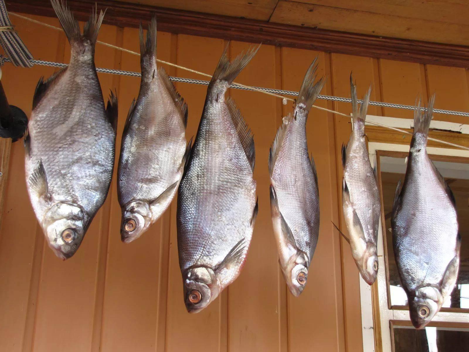 Рыба белый амур: костлявая или нет, вред и польза вкусного мяса