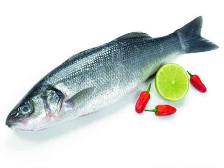 Морской волк (сибас): описание, внешний вид, полезные свойства, использование в кулинарии и ловля