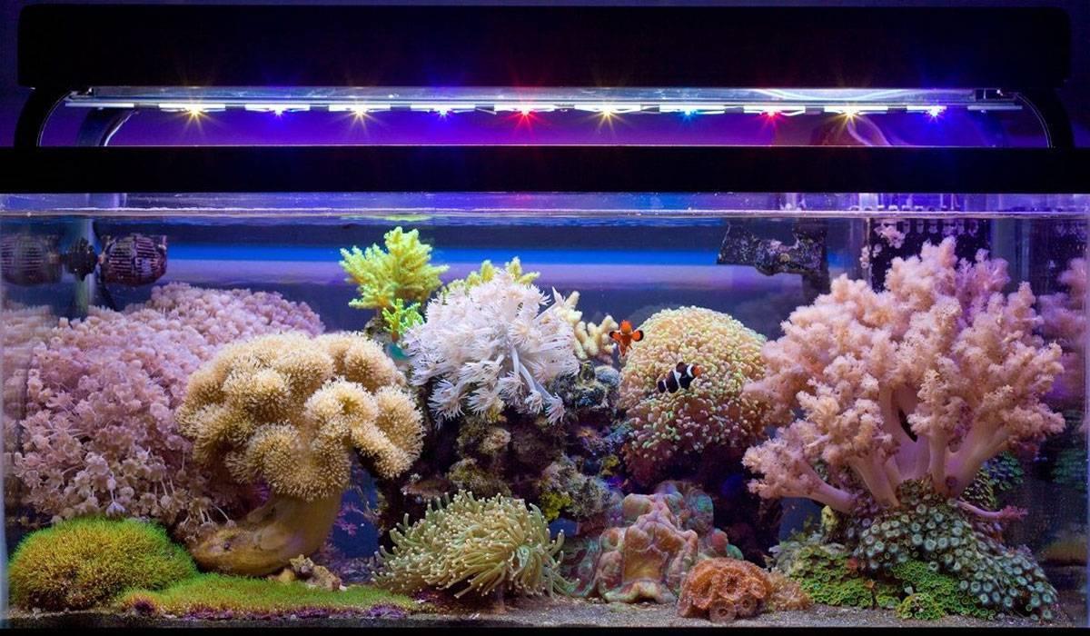 Запуск морского аквариума. Оборудование, засолка воды, живые камни, рыбы – все, что нужно для запуска морского аквариума.