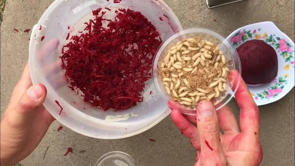 Как покрасить опарыша в красный (и любой другой) цвет и придать запах - всё о рыбалке - медиаплатформа миртесен