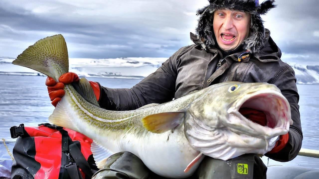 Морская рыбалка в баренцевом море, рыбалка и рыболовные туры в мурманске на кольском полуострове, в териберке