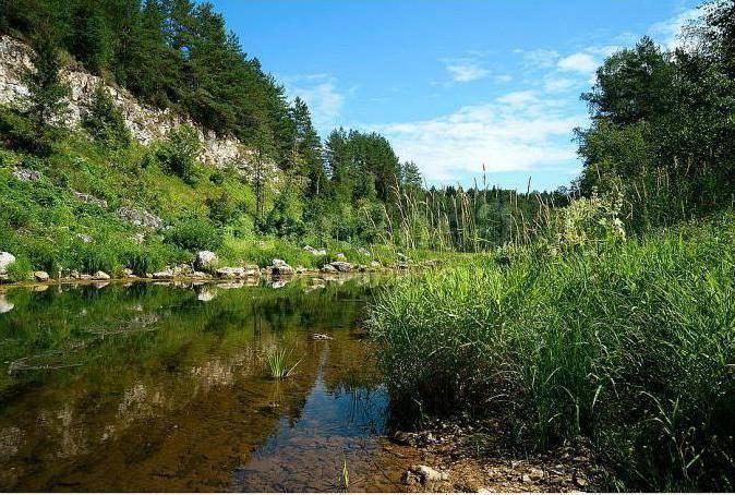 В реке осуга тверской области вода превратилась в яд (видео)