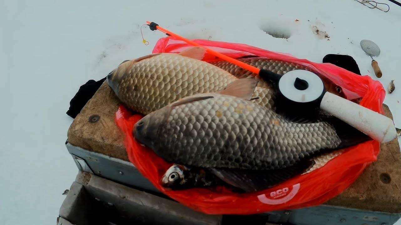Ловля карася на пруду зимой | советы по выбору приманок и технике