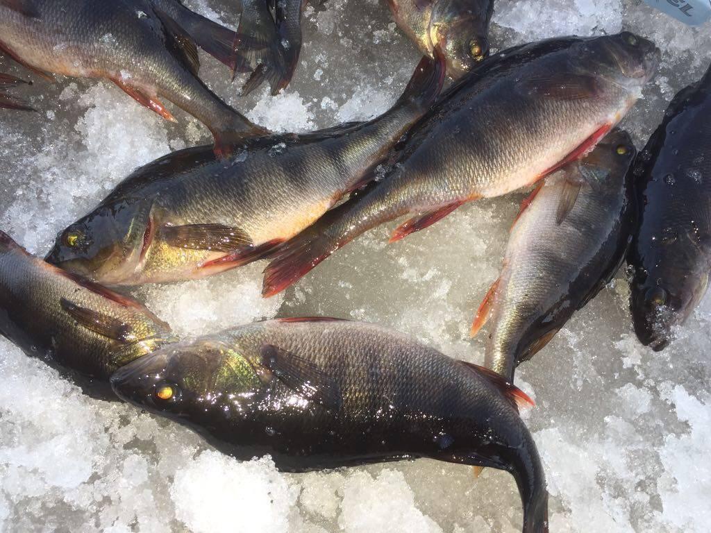 Рыбалка в твери и тверской области