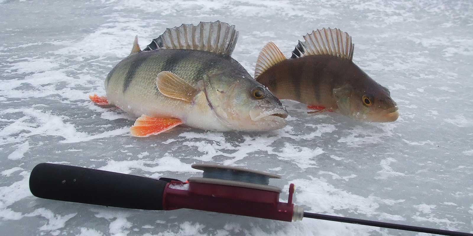 Зимняя рыбалка на реке: особенности подледной ловли зимой, новые видео