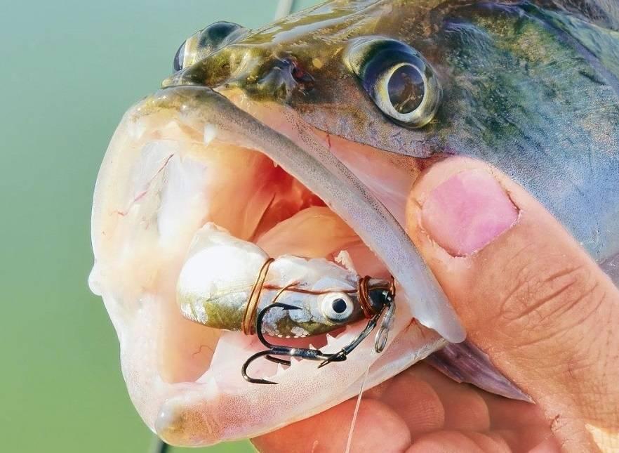Как поймать зимой судака на тюльку?! рассмотрим все тонкости ловли