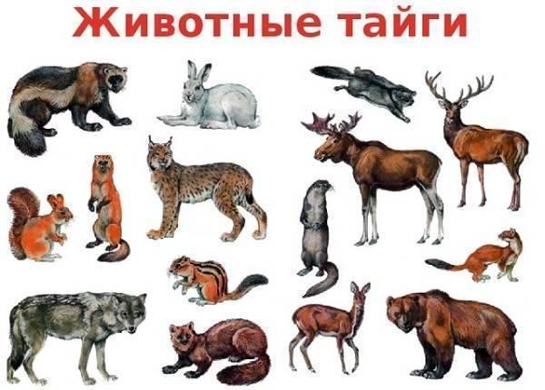 Животные и растения тайги