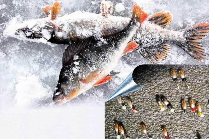 Ловля крупного окуня зимой со льда на мормышку и блесну