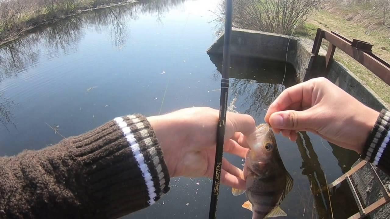 Рыбалка на дону — платная и бесплатная