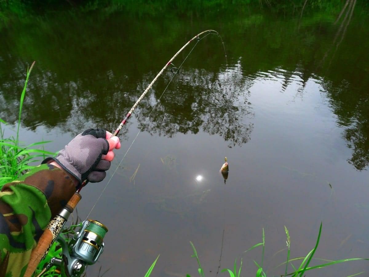 Оснастка поплавочной удочки на карася: крючки, леска, наживка, прикормка