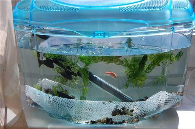 Разведение аквариумных рыбок: бизнес-идея, как открыть, вложения, оборудование, что нужно для открытия + реальные кейсы