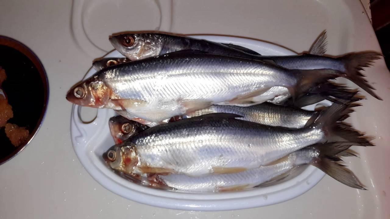 Морской язык (34 рецепта с фото) - рецепты с фотографиями на поварёнок.ру