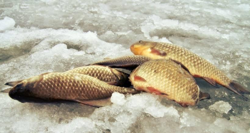 Как сохранить рыбу: летом в жару без заморозки