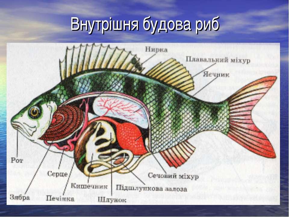 Окунь морской - рецепты