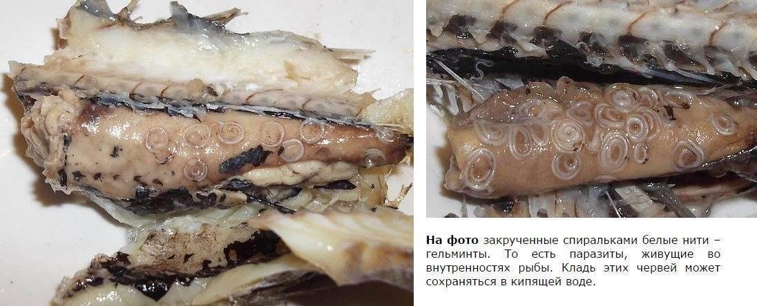 Погибают ли паразиты в рыбе при заморозке, при какой температуре?