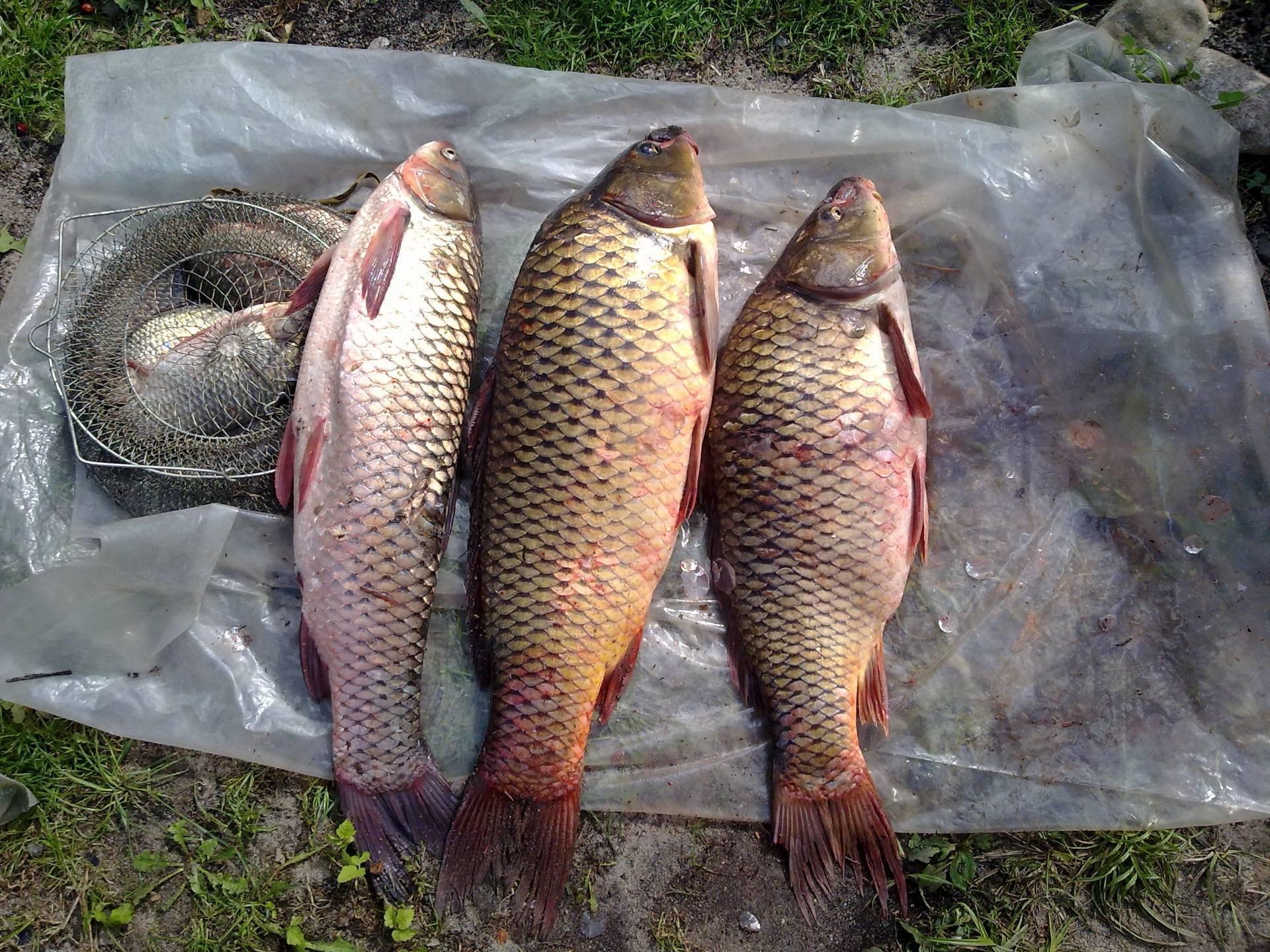 Рыбалка в карачевском районе брянской области